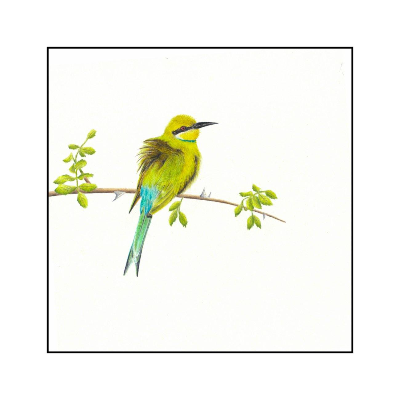 Swallow Tailed Bee Eater - The Original - Framed - 27 x 27cm