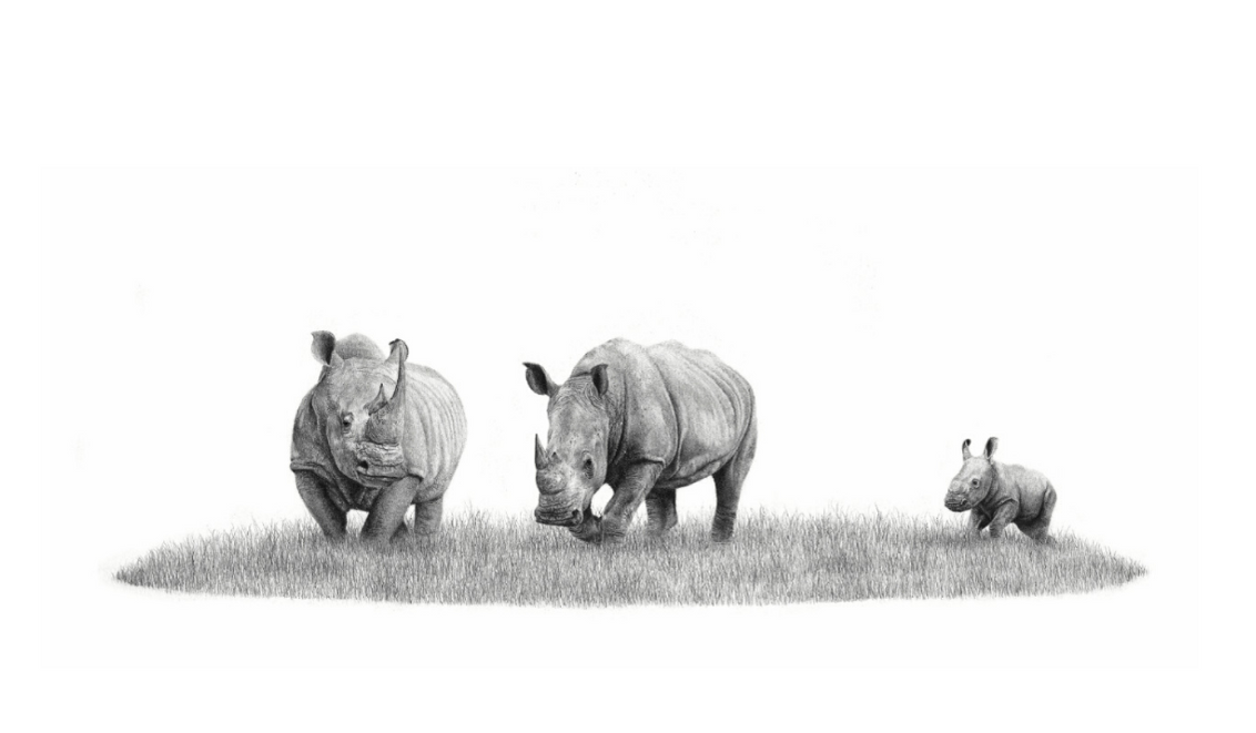 African White Rhino - On Canvas