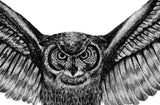 Realistic owl design download high resolution download