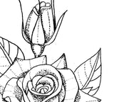 3 x Rose linework tattoo design high resolution download