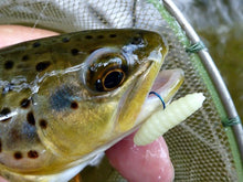 Brown trout caught with Nikko Waxworm