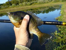 Nissin Pocket Mini with bluegill