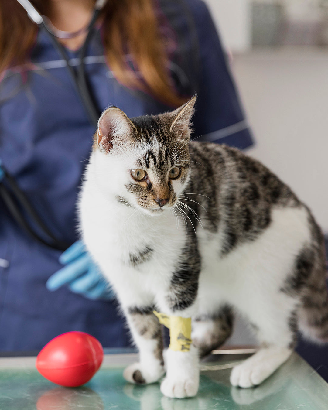 Should You Give Your Pet CBD After Going Through Surgery?