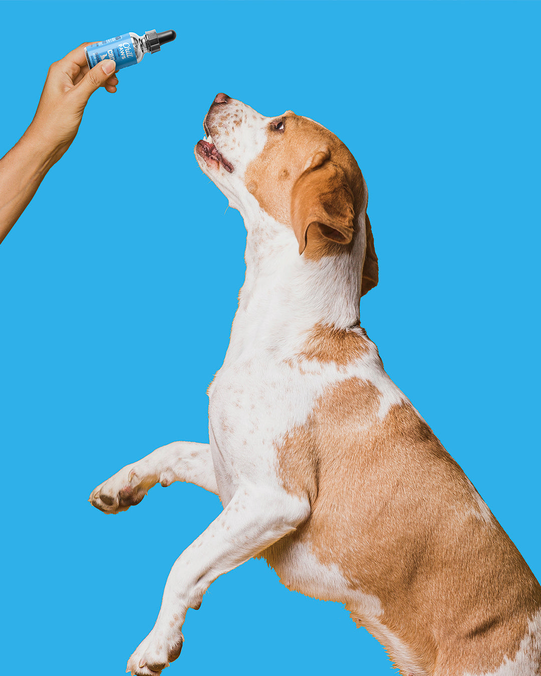 Proper Tips for Discussing Pet CBD Oil with Your Veterinarian ...