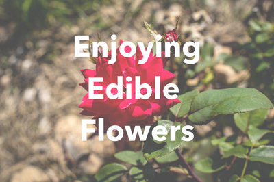 Enjoying Edible Flowers