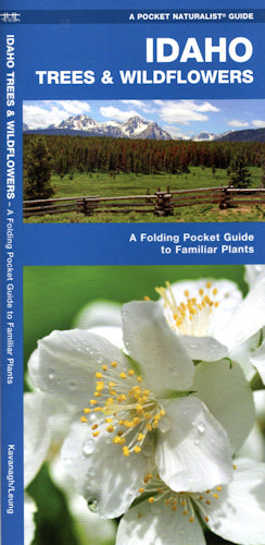 Idaho Trees and Wildflowers - Folding Guide