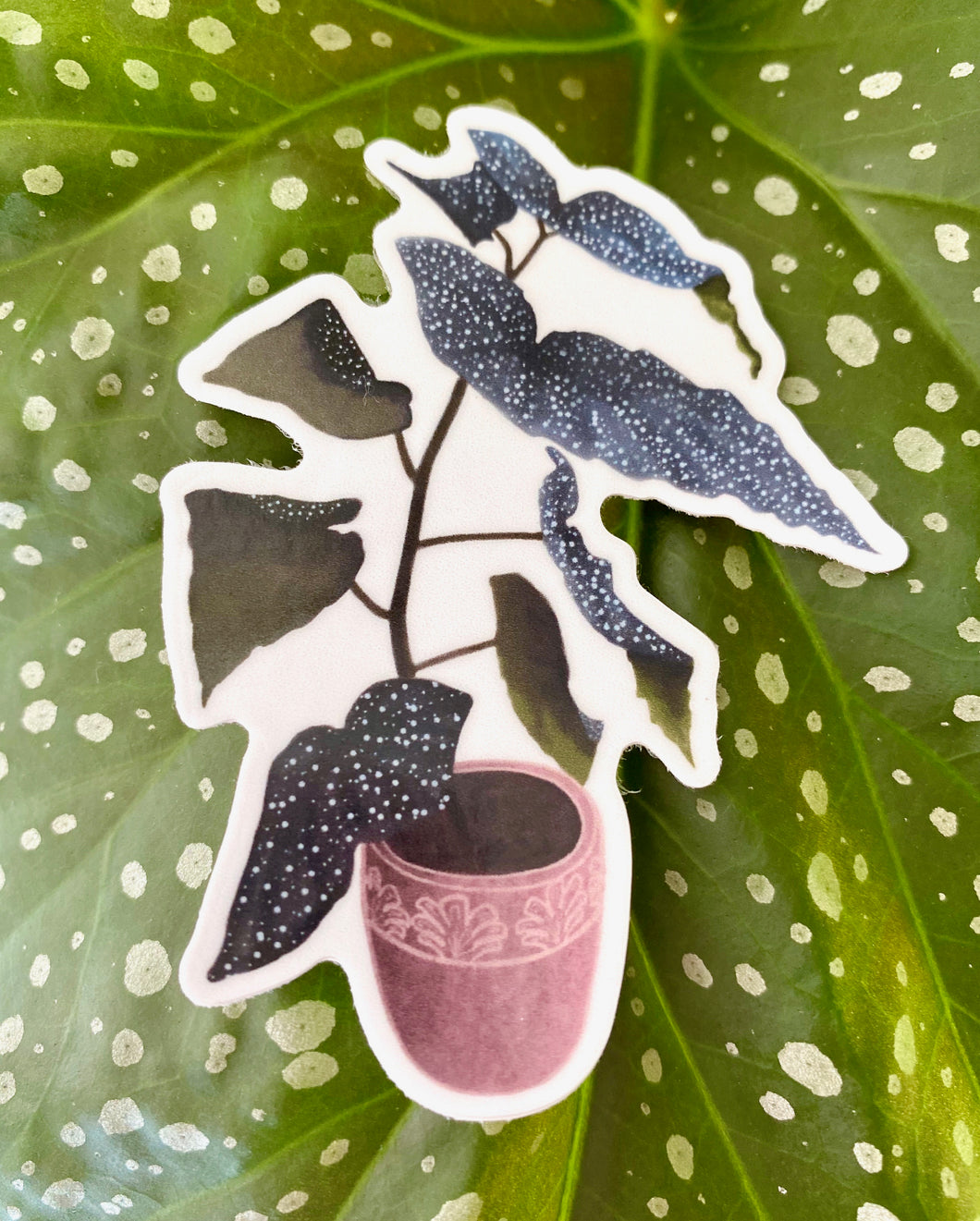 Elephant Ear Begonia Sticker