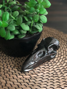 Raven Skull Home Accents