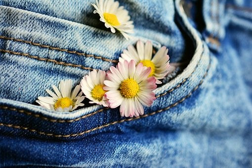 Denim Jeans close up with daisies in pocket.