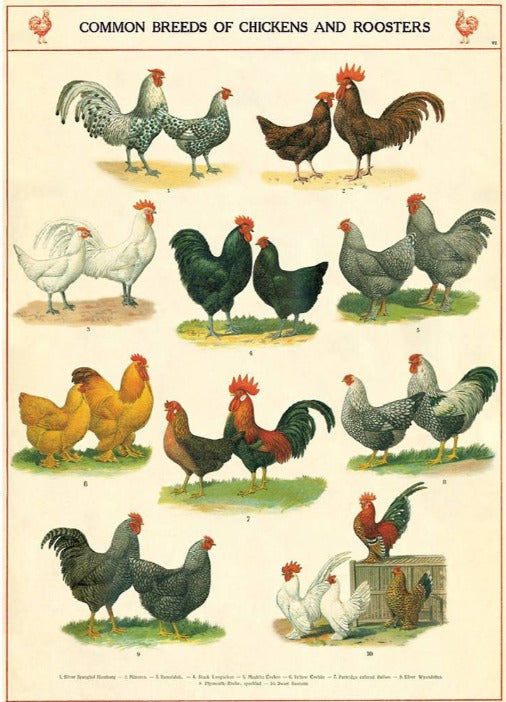 Chickens and Roosters Poster Wrap
