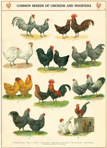 Chickens and Roosters Flat Wrap