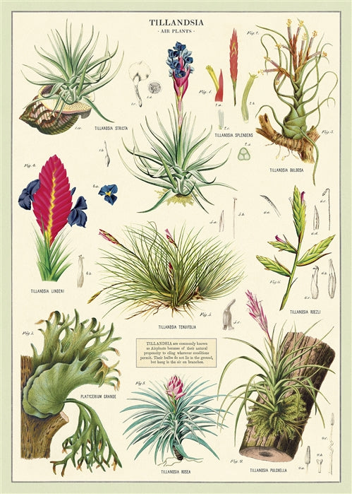 Air Plants Poster Wrap