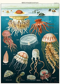 Jellyfish Poster Wrap