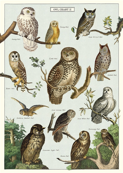 Owl Chart Poster Wrap
