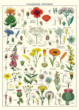 Wildflowers Guide Poster Wrap