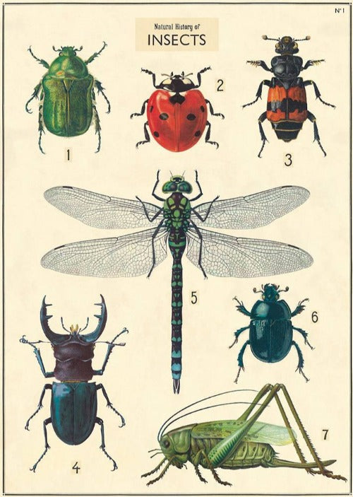 Insect Chart Poster Wrap