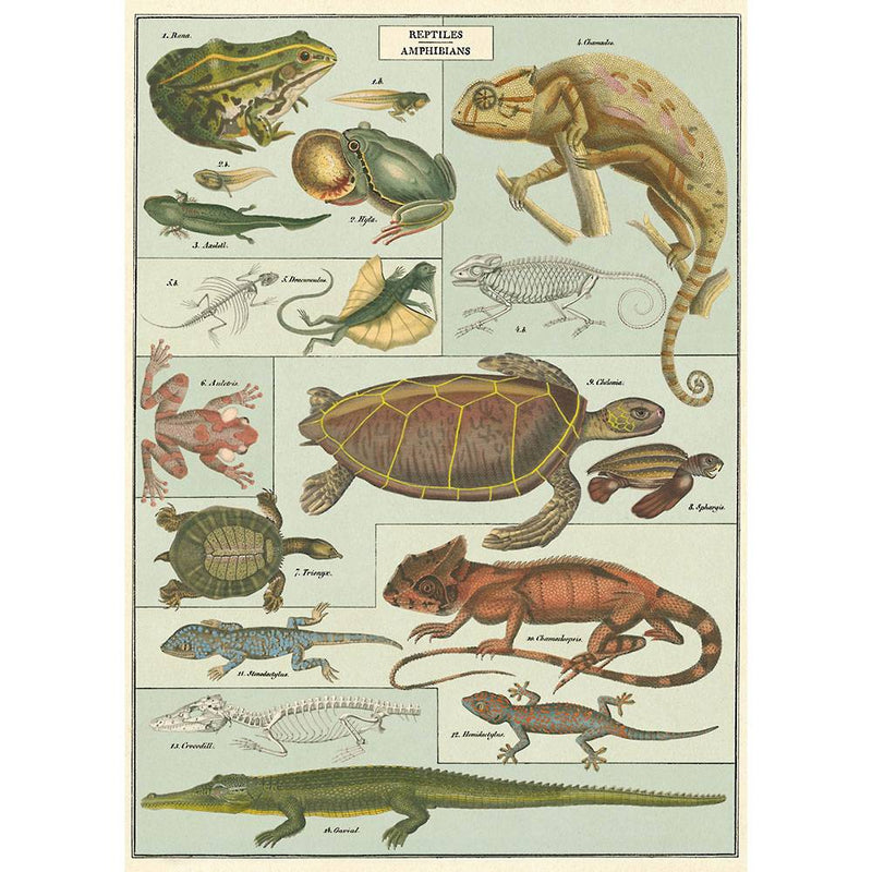 Amphibians and Reptiles Poster Wrap