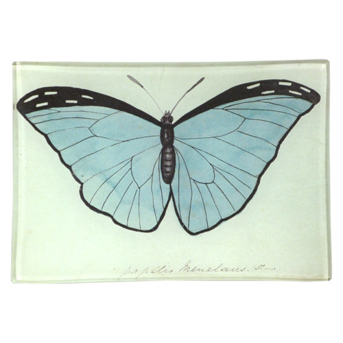 Blue Papilio Mini-Tray