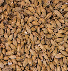 Gladfield Manuka Smoked Malt