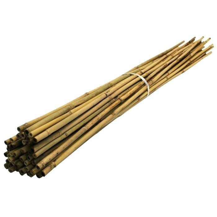Bamboo Stake 30cm - Bamboo Stakes