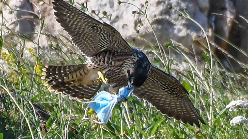 How you can save wildlife from Covid litter 😷