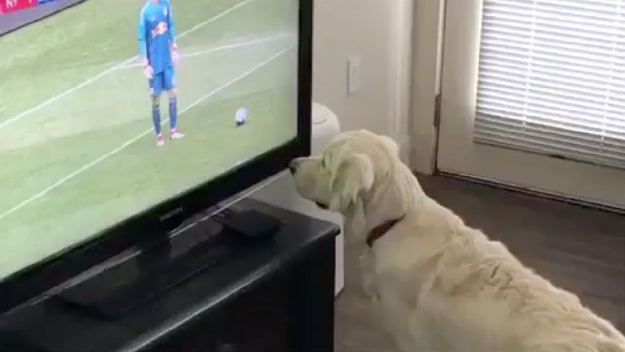 Why our pets are suddenly watching much more TV