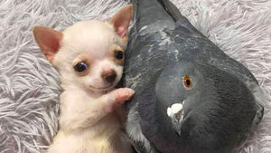The reason this pup and this pigeon are best friends