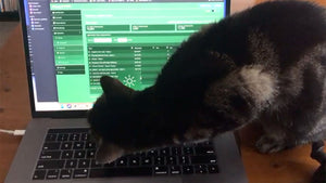 The surprising reason cats are drawn to keyboards