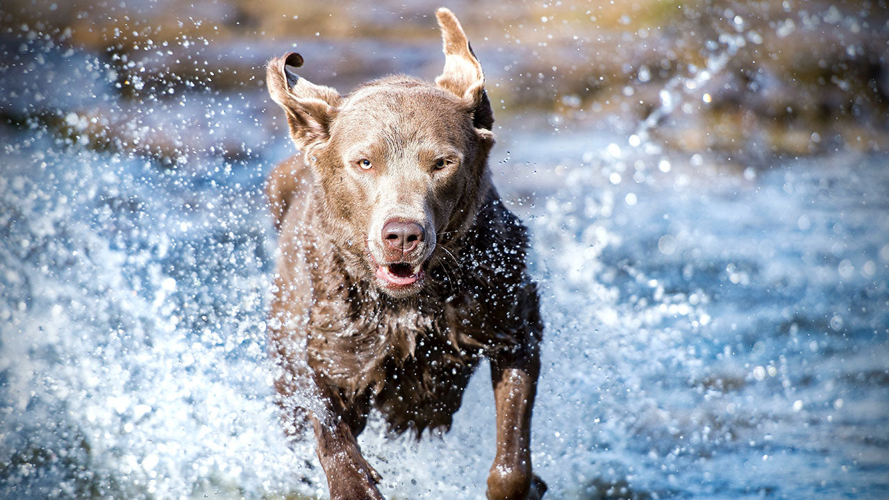 We finally know what 'wet dog smell' really is
