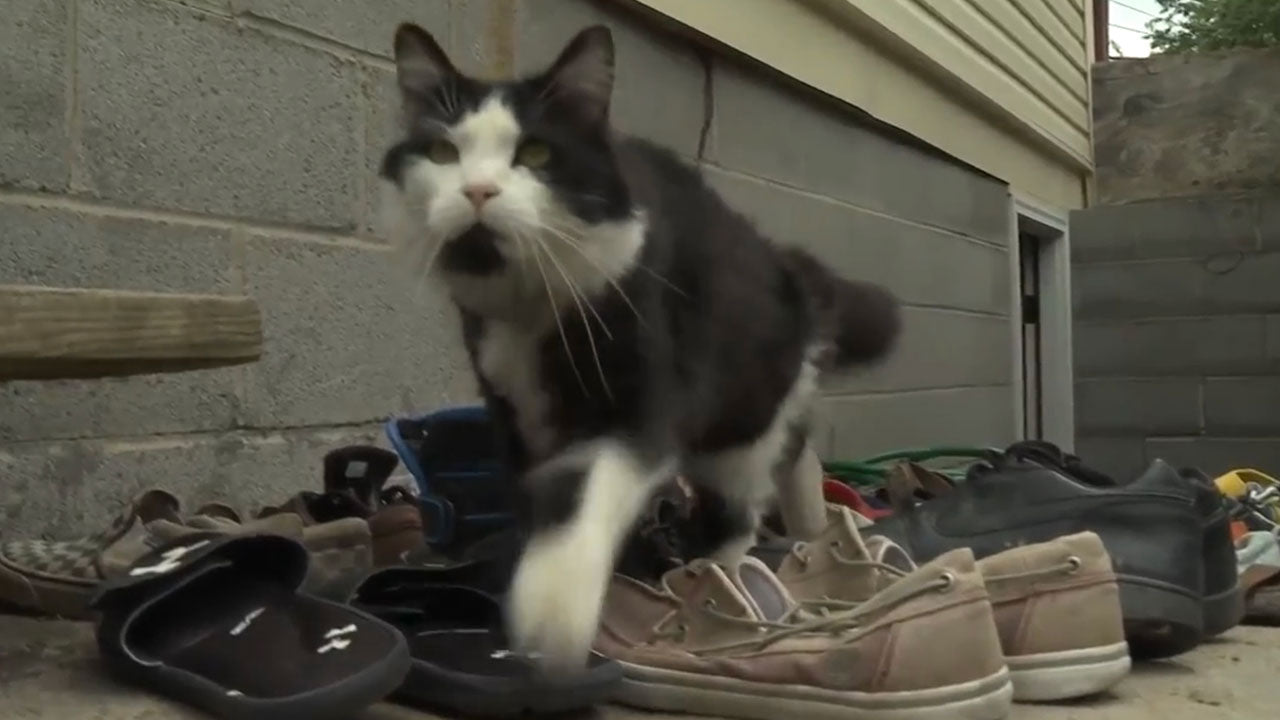 This cat has a very different take on hunting mice