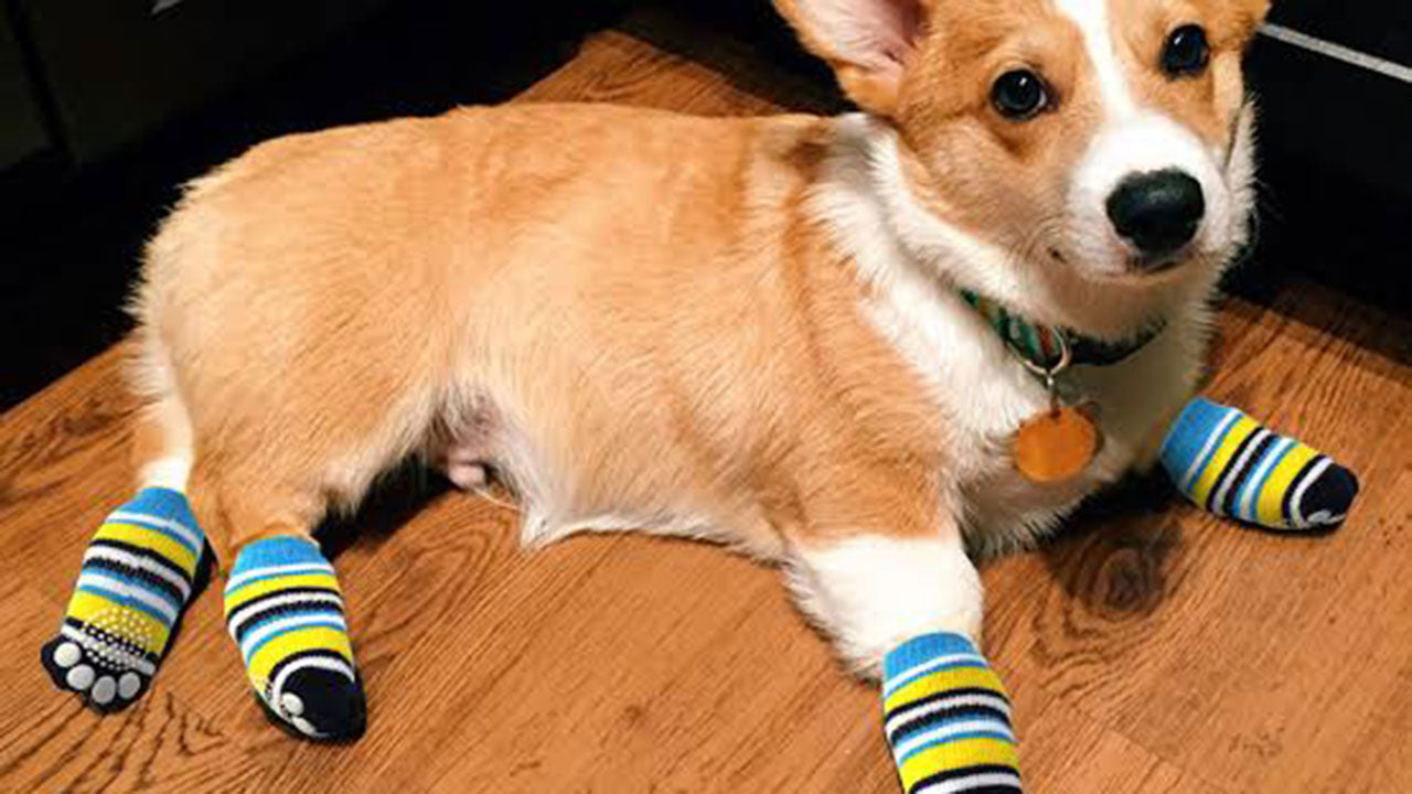 Why pets can't walk with socks on 😳