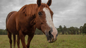 Why Macy the adopted ex-racehorse is buzzing