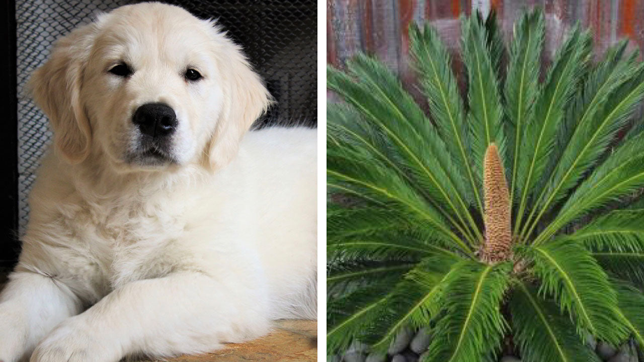 The surprisingly dangerous plant for pets