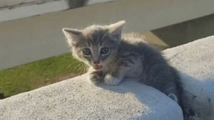 This tiny stray kitten turned a bad day into her best life