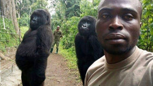 That extraordinary gorilla selfie explained