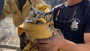 This owl is not happy about his incredible rescue