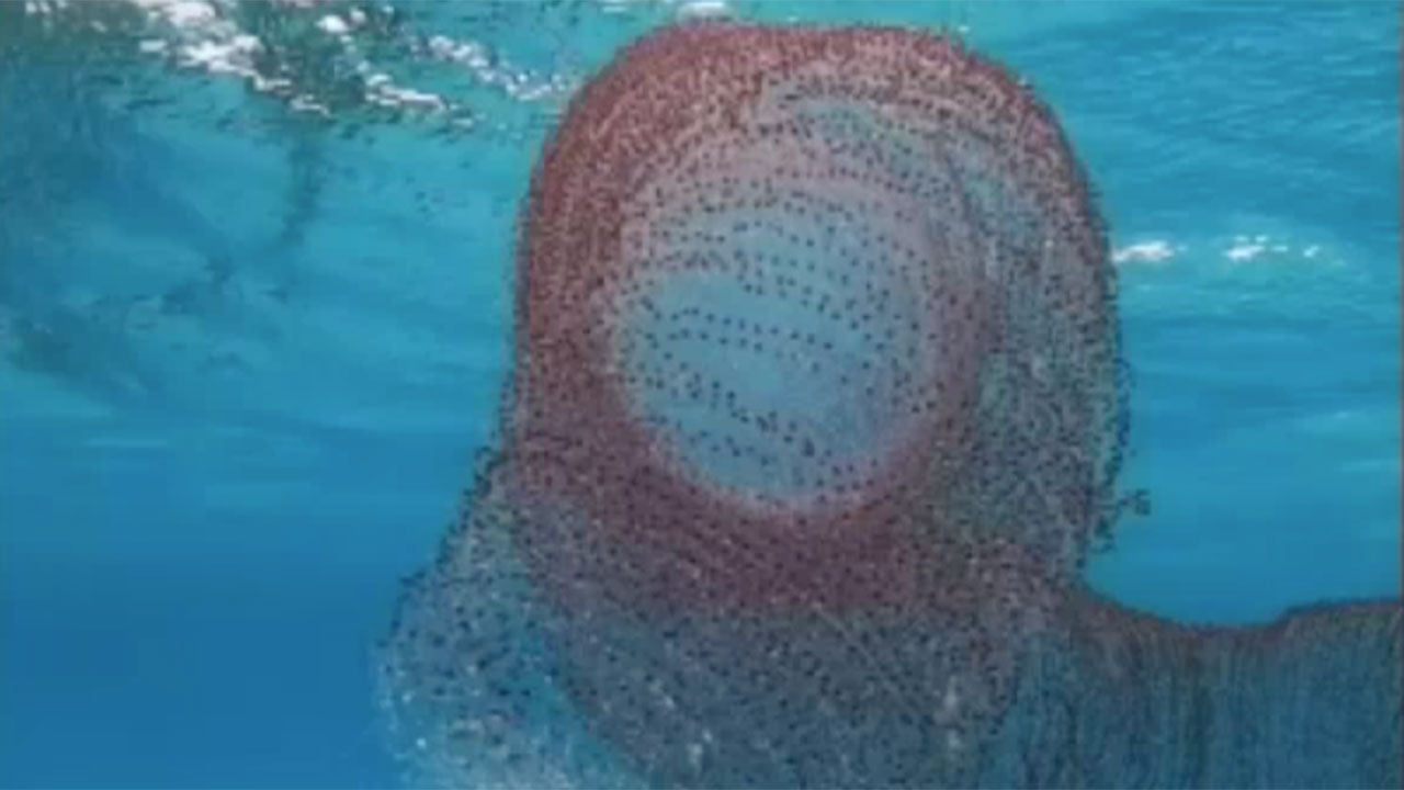 Divers just found a giant natural slinky