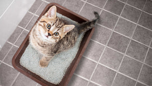 Why that litter tray tells you EVERYTHING
