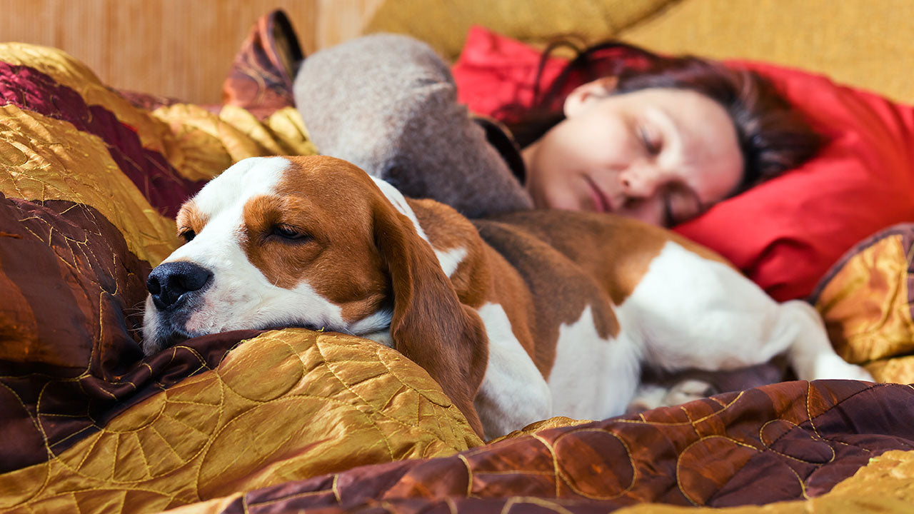 Does a pet in the bed mean less sleep?
