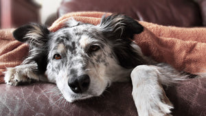 The truth on whether our pets can catch our colds and flu. And vice versa.
