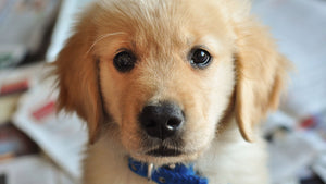 Be warned. Research says puppy dog eyes are more powerful than we ever thought!