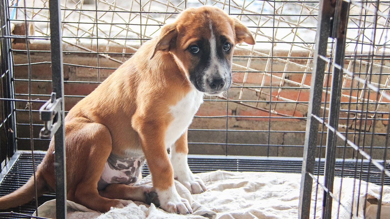 Why now could be the perfect time to foster a rescue pet!