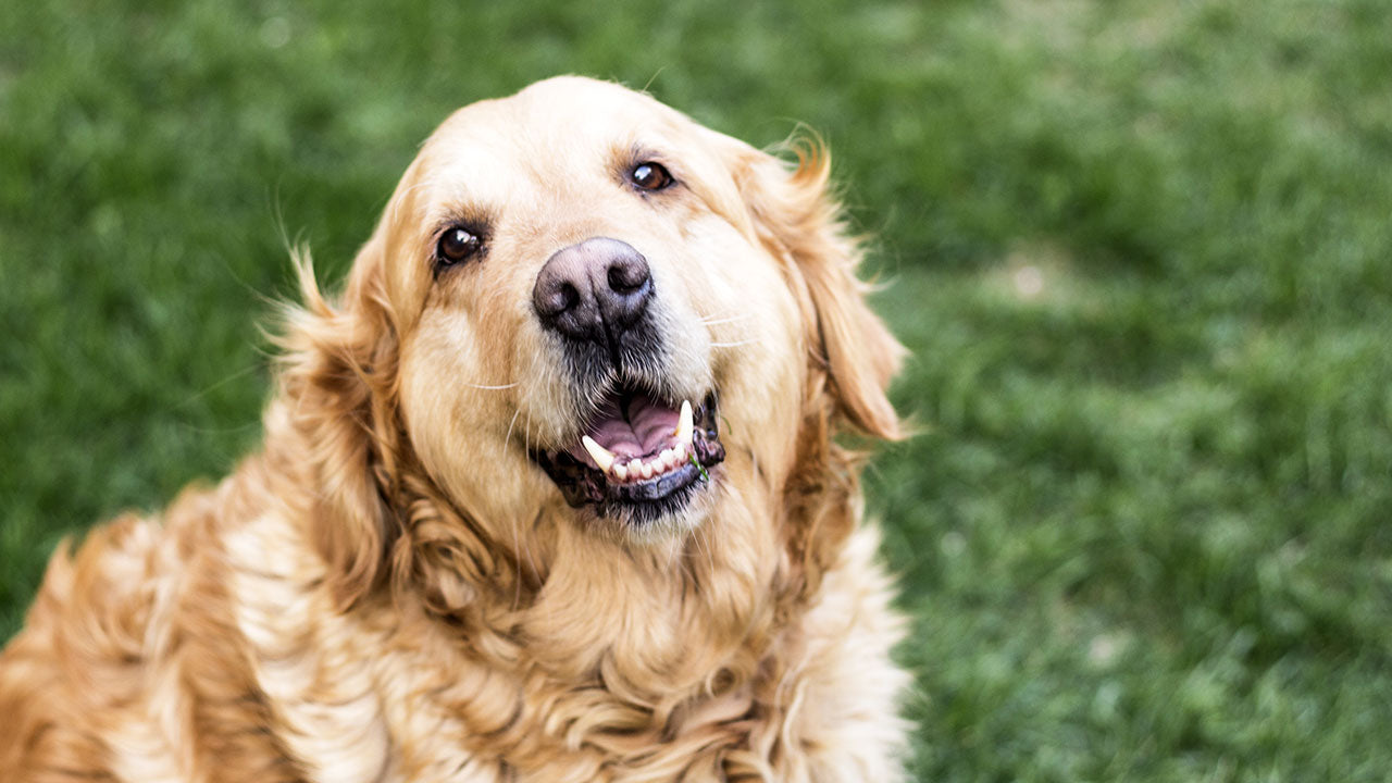 What your dog's REAL age is in human years
