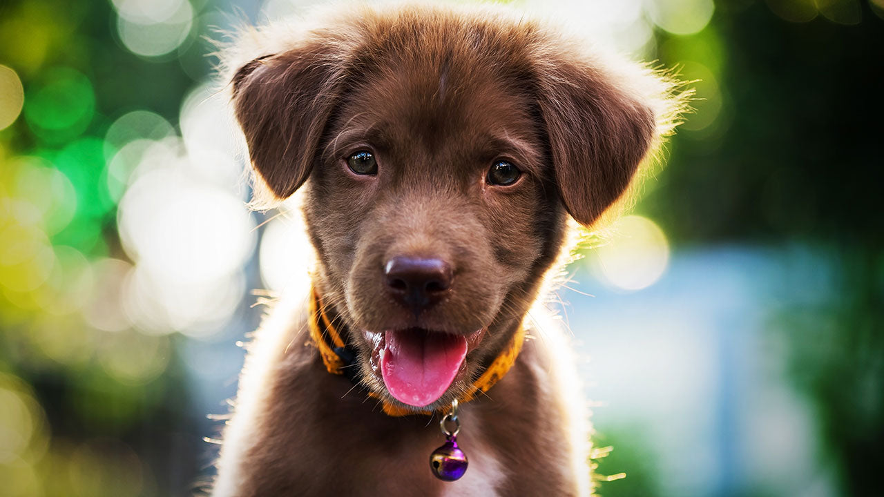 Why the biggest factor preventing vaccinations isn't a fear of puppy autism...