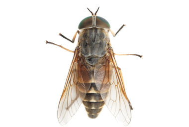 Hot Horse Fly Shield : Long lasting oil