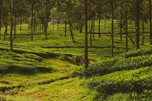 Explore Kerala For 3N/4D