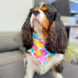 """Pawty Time"" Celebration Bandana-bandana-Freestyle Paws"