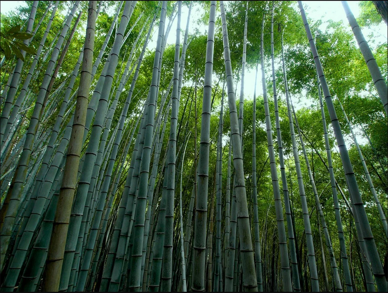 Do you know why bamboo products are environmentally friendly?