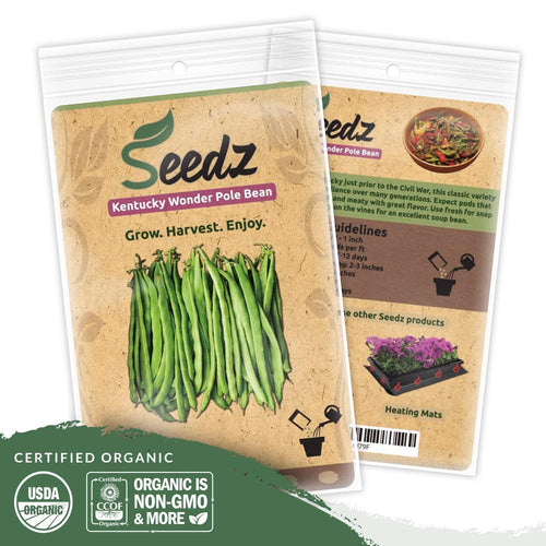 Organic Bean Seeds (APPR. 75) Kentucky Wonder Pole - Heirloom Vegetable Seeds - Certified Organic, Non-GMO, Non Hybrid - USA
