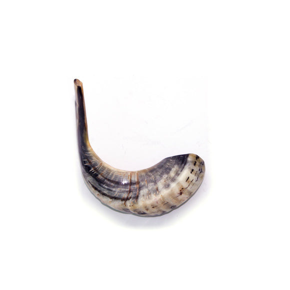 Natural Ram's Horn Shofar 40-44cm - The Peace Of God